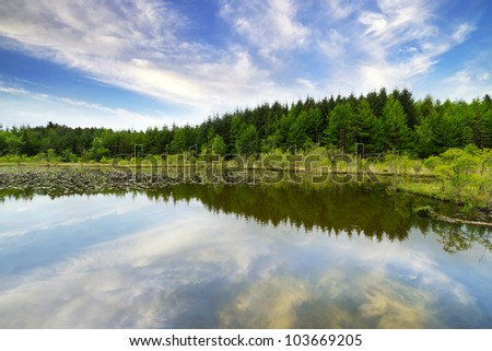 Beautiful Irish forest reflected in the lake