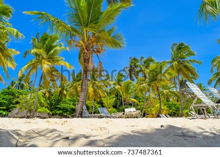 Beautiful island with white sand sunbeds, deep blue sky and palms