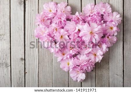 beautiful japanese cherry blossoms as heart - stock photo