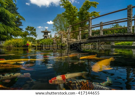 beautiful japanese garden with many plant pecies and water pond where you can see koi fish - Japanese Koi Garden
