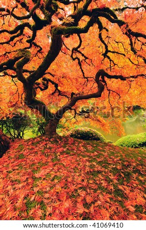 Beautiful japanese maple tree glowing with color in autumn - vertical image - stock photo