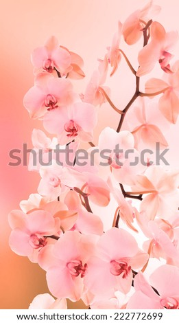 Beautiful Japanese Orchid.Spring - stock photo