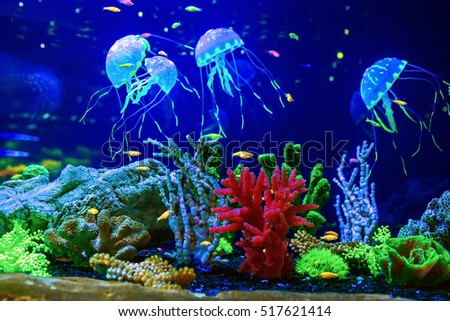 Beautiful Jellyfish Medusa Neon Light Fishes Stock #1: stock photo beautiful jellyfish medusa in the neon light with the fishes aquarium with blue jellyfish and