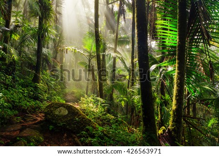 Beautiful jungle path through the El Yunque national forest in Puerto Rico - stock photo