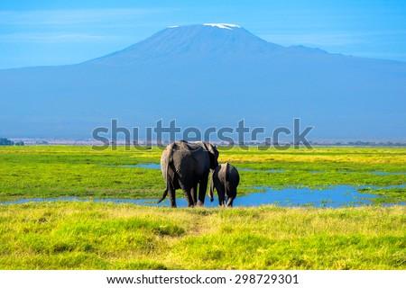 Beautiful Kilimanjaro mountain and elephants, Kenya,Amboseli national park, Africa  - stock photo