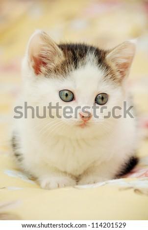 Beautiful kitten - stock photo