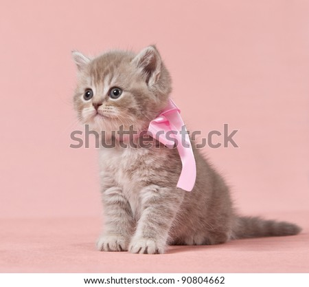 beautiful kitten - stock photo