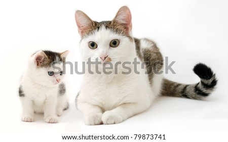 Beautiful kitten and a lady-cat on the white background (the same cat at the different periods of life) - stock photo