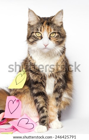 Beautiful kitten and post-its with drawn hearts - stock photo