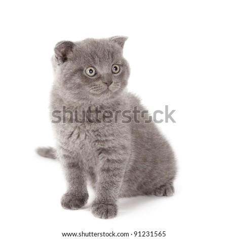 beautiful kitten isolated on white background