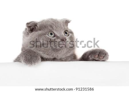 beautiful kitten isolated on white background - stock photo