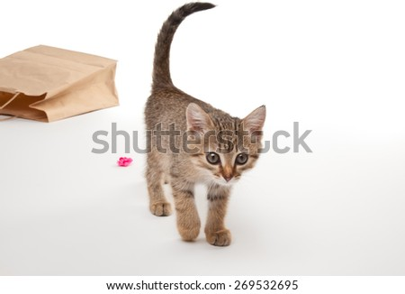 Beautiful kitten playing with paper isolated on white - stock photo