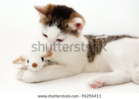 Beautiful kitten playing with plush mouse on the white background - stock photo