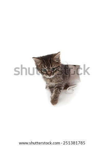 Beautiful kitten playing with white paper isolated o white - stock photo