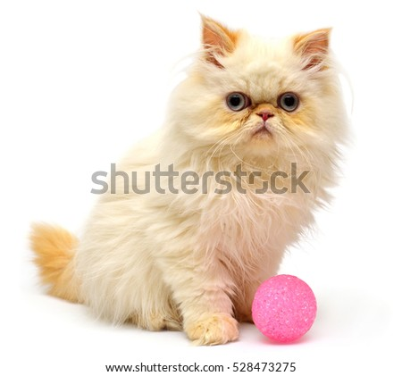 Beautiful kitten sitting with balls isolated on white background. Persian cat. Creative