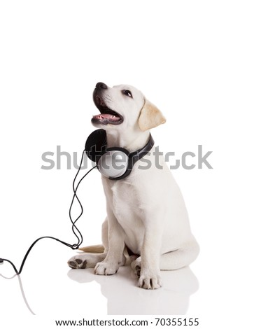 Beautiful labrador retriever with headphones, isolated on white - stock photo