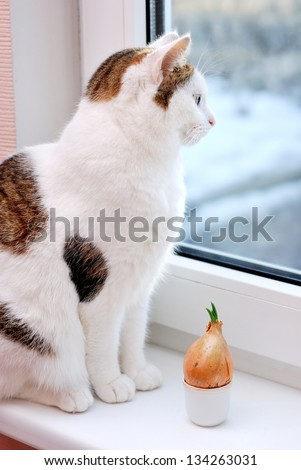 Beautiful lady cat sitting near to onion in the cup on the window sill - stock photo
