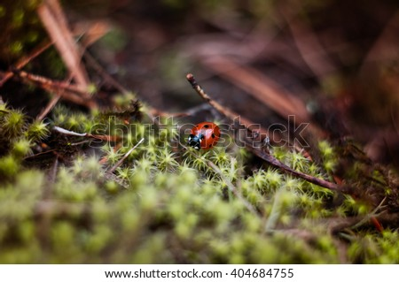 Beautiful ladybird on green moss, close up - stock photo