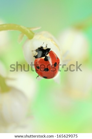 Beautiful ladybird on lily of the valley