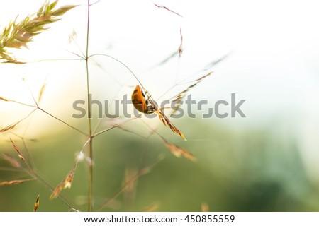 Beautiful ladybug siting on grass at summer sunset. Insect macro . - stock photo