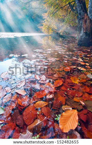 Beautiful lake in the autumn forest  - stock photo