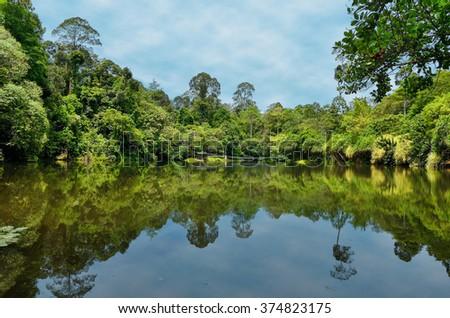 Beautiful lake or river with tree reflections, Borneo, Malaysia  - stock photo
