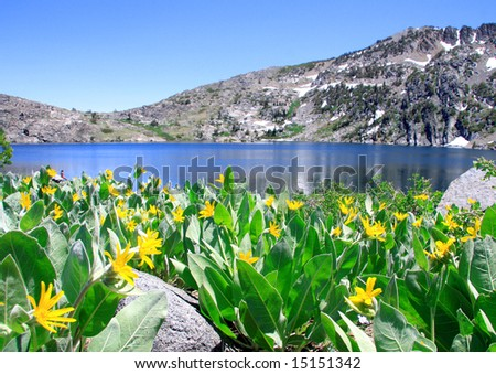 Beautiful Lake Winnemucca near Lake Tahoe, California, with wild Mule's Ear flowers in the foreground. - stock photo