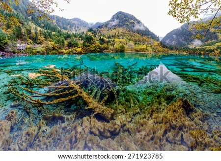 Beautiful lake with submerged tree trunks. Jiuzhaigou Valley was recognize by UNESCO as a World Heritage Site and a World Biosphere Reserve - China - stock photo