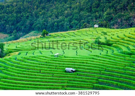 Beautiful landscape about terraced rice field in Chiangmai ,Thailand - stock photo