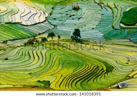 Beautiful landscape about terraced rice field in Laocai province, Vietnam - stock photo
