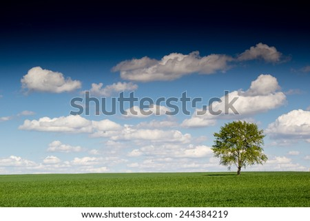 beautiful landscape and lone tree - stock photo