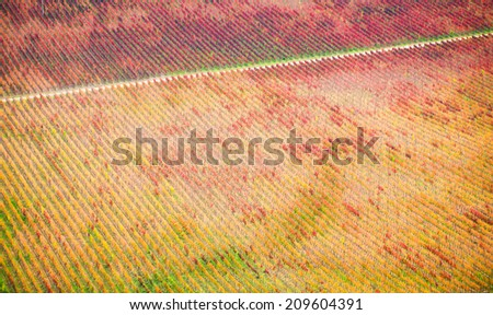 Beautiful landscape and patterns of a vineyard in San Fernando, Chile - stock photo