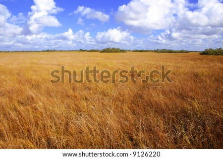 Beautiful landscape covered with golden summer grass. - stock photo