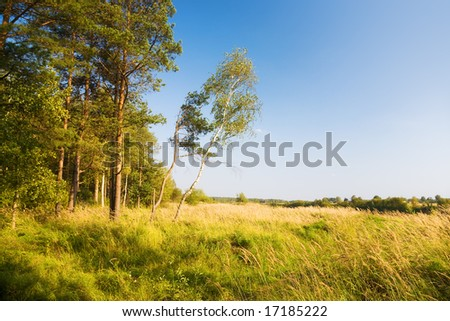 Beautiful landscape. Field and edge of forest. - stock photo