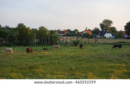 Beautiful landscape: Horses on Hiddensee Island, Germany