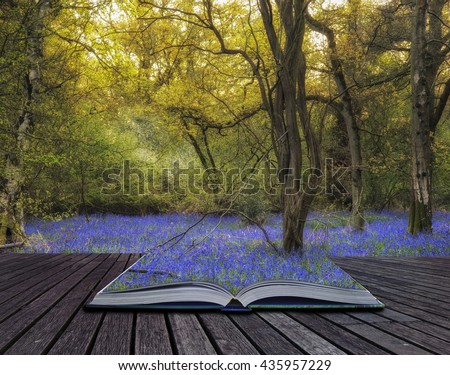 Beautiful landscape image of bluebell forest in Spring