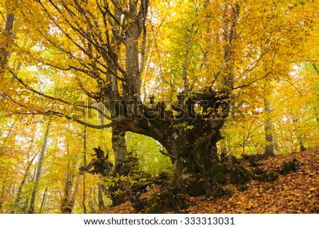 Beautiful landscape image of forest covered in Autumn Fall color contrasting green and orange, brown and gold.