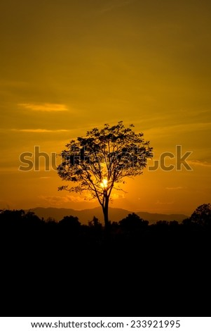 Beautiful landscape image with sun and trees silhouette at sunset.