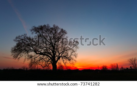 Beautiful landscape image with trees silhouette at sunset. - stock photo