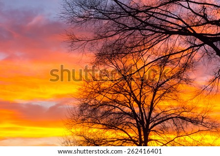Beautiful landscape image with trees silhouette at sunset in spring - stock photo