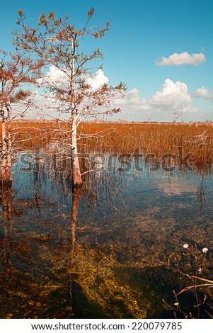 Beautiful landscape in florida national park - stock photo