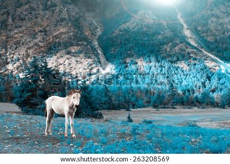 Beautiful landscape in Himalayas mountains, Annapurna area. - stock photo