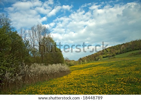 Beautiful Landscape - Landscape with green meadow full of the yellow flowers and plants under blue sky