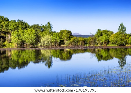 Beautiful landscape of a forest and lake  - stock photo