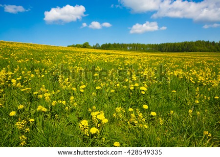 Beautiful landscape of a Sunny day, views to the flower meadow and the blue sky. Pastoral panorama of nature summer.  Field with yellow dandelions to the horizon.