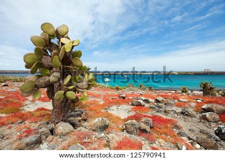 Beautiful landscape of Galapagos South Plaza island - stock photo