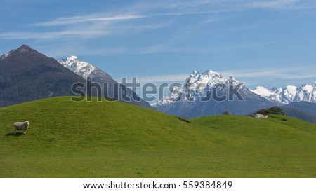 Beautiful landscape of Glenorchy, New Zealand - hills covered by green grass with herds of sheep