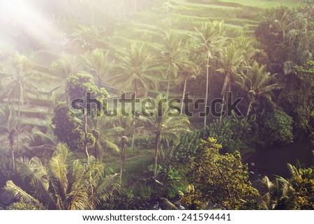 Beautiful landscape of humid tropical jungle. Bali, Ubud, Indonesia. - stock photo