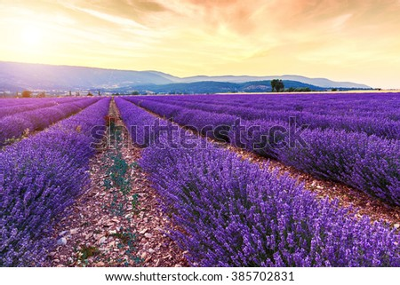 Beautiful landscape of lavender fields at sunset near Sault, Provence-France - stock photo