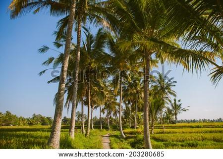 Beautiful landscape of rice fields and lush greenery in Ubud, Bali island, Indonesia - stock photo